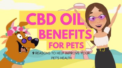 CBD Oil Benefits For Pets: 9 Reasons To Try CBD Today