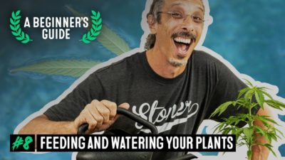A Beginner's Guide with Kyle Kushman. EP 8: Feeding & Watering