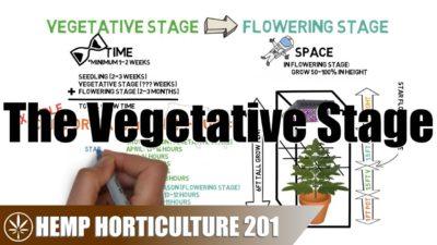 What To Do In The Vegetative Stage