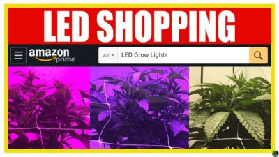 What to Look For When Buying LED Grow Lights Online