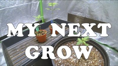 Starting My Next Indoor Cannabis Grow With Nukeheads Seeds And Nutrients