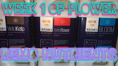 Using Remo nutrients, How to mix nutrients, PPM, P.H,transition to flower & week 1