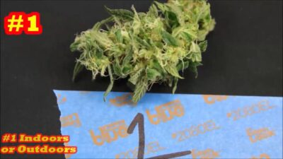 Mixing Marijuana Nutrients  E#4 Hydro Vs  Media   The Truth About How Much To Use With The Grow Boss