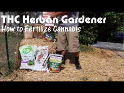 How to Grow Marijuana Outdoors – Fertilizer: What, When, and Why
