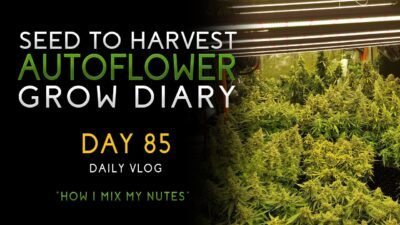 Day 85 – How to mix cannabis nutrients! – From Seed to Harvest – Autoflower – Advanced Nutrients