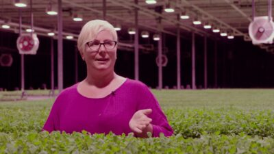 Increase Crop Yields – LED Grow Lights Boost Success of Commercial Microgreens Greenhouse.