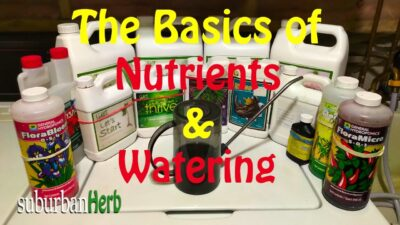 The Basics of Watering and Feeding Cannabis Nutrients with Suburban Herb