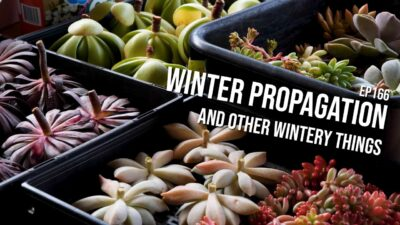 #166 – Propagation in winter, and the next phase of my grow lights experiments