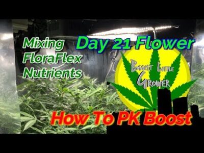 Indoor Grow Guide Day 21 Flowering with FloraFlex Nutrients  How To Use PK Booster and GroTek Pro Si