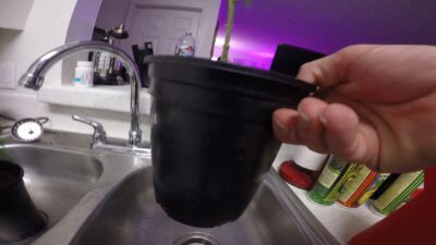 How and when to feed and water your marijuana plants