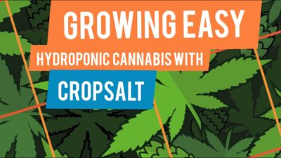 Growing Easy Hydroponic Cannabis with Cropsalt Nutrients