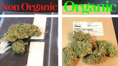 Organic vs Non Organic Weed – Buying Eighths of Cannabis