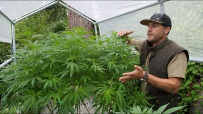 Outdoor Home Grow Ep 3 – Transition Your Cannabis Plants To Flowering