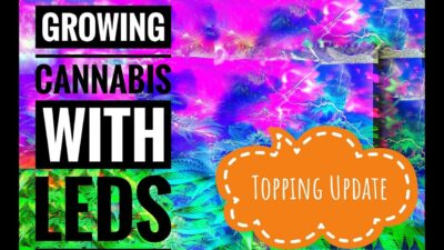 Growing Cannabis with LED's TOPPING Update LED grow Lights