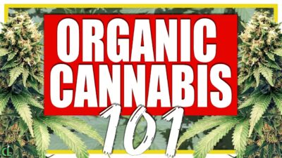 Beginner's Guide to Growing Organic Cannabis