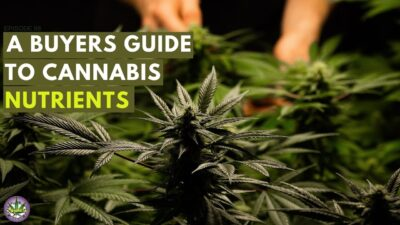 A Buyers Guide To Cannabis Nutrients (68)