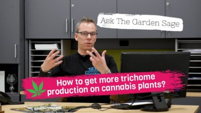 How to get more trichome production on cannabis plants? – Ask the Garden Sage