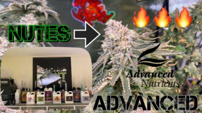 Advanced Nutrients guide for INSANE FROSTY TERPY CANNABIS BUDS !!!! Part 1