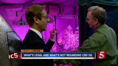 What's Legal And Illegal About CBD Oil In Tennessee