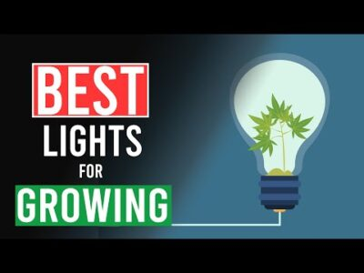 Best Lights for Growing Cannabis!