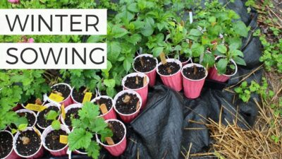 Winter Sowing: The Complete Guide to Seed Starting without Grow Lights