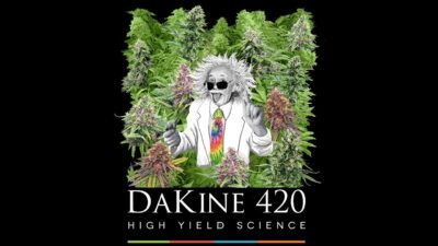 Best Cannabis Nutrients: Dakine 420 Beats All the Competitors