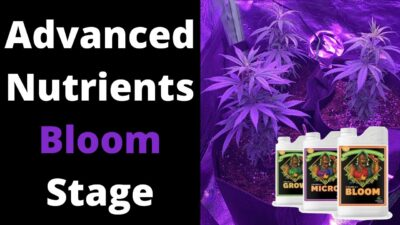 How I Mix Advanced Nutrients Bloom Stage