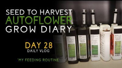 Day 28 – My feeding routine! – From Seed to Harvest – Autoflower – Advanced Nutrients