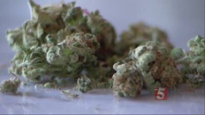Bill Allows Cannabis Oil To Be Brought To Tennessee