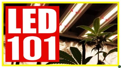 Growing Cannabis with LED Lights (WHAT YOU NEED TO KNOW BEFOREHAND)