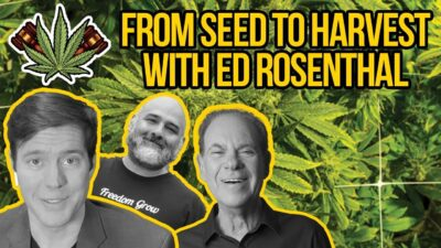 Growing Weed with Ed Rosenthal – Cannabis Seeds, Grow Lights, Curing | How to Grow Marijuana LEGALLY