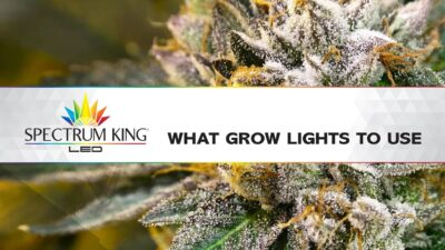 What Grow Lights To Use?