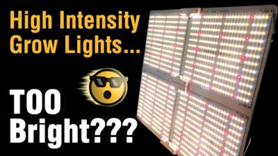 Super Bright LED Grow Lights Replace High Watt HPS -Best Value: Spider Farmer Dimmable SF4000 Review