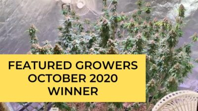 October 2020 Featured Grower – California Lightworks LED Grow Lights